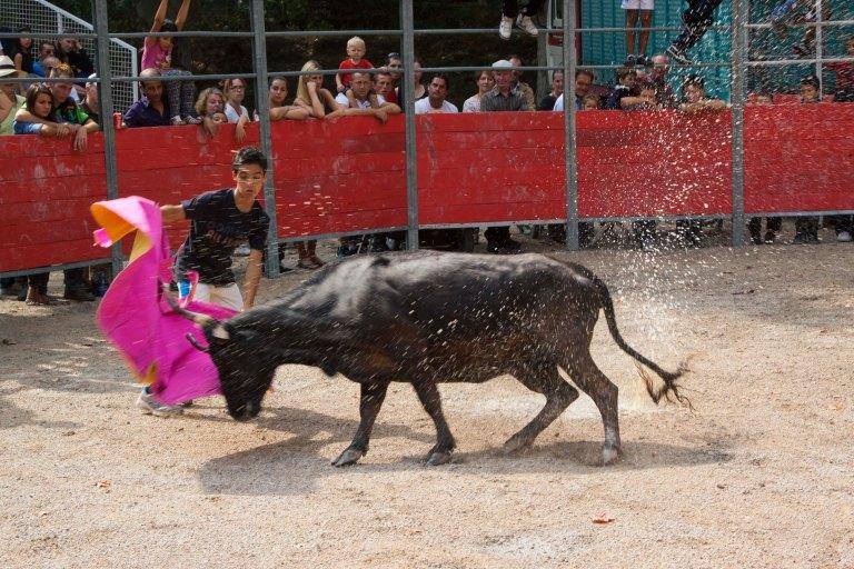 Prospective Bullfighter