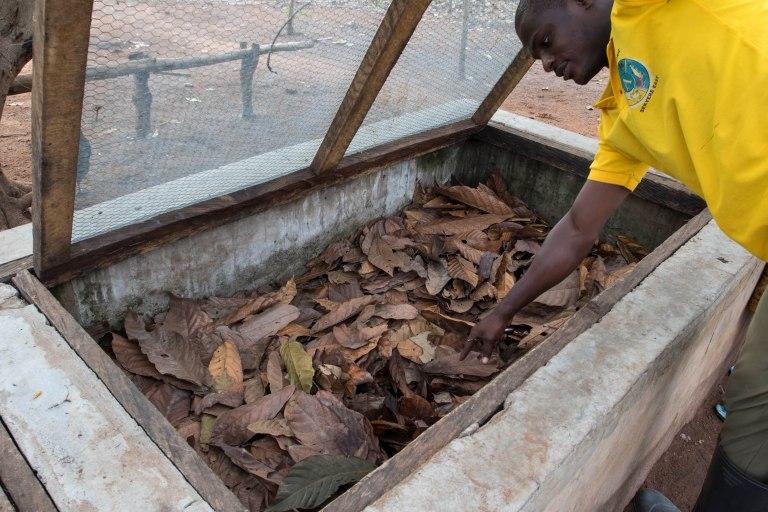 Ghana-Farms-0572