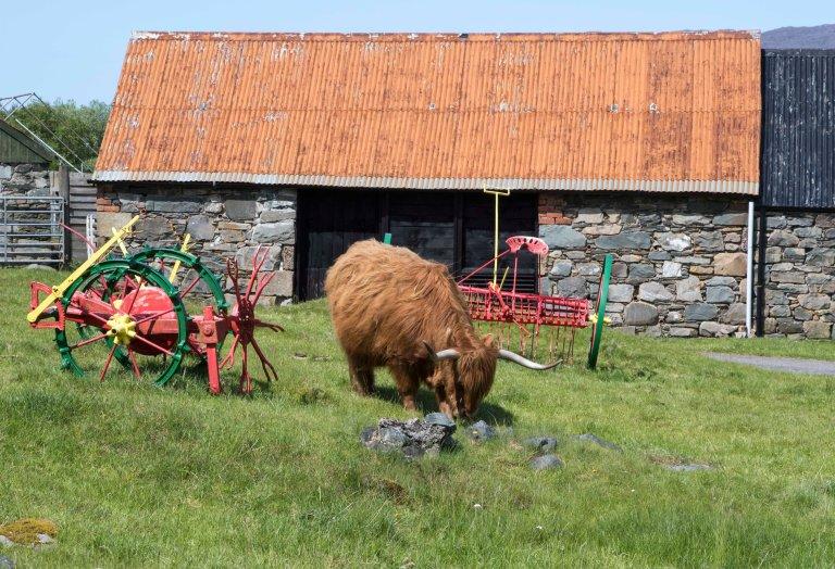 Scotland-Lochcarron-2503