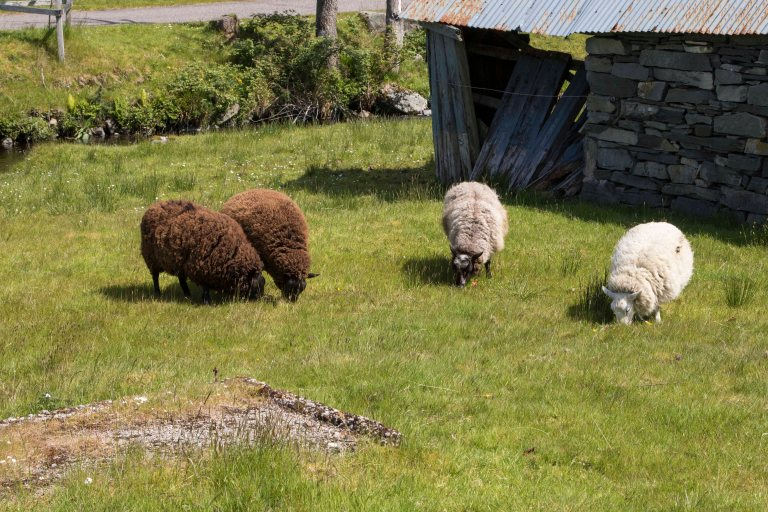 Scotland-Lochcarron-2529