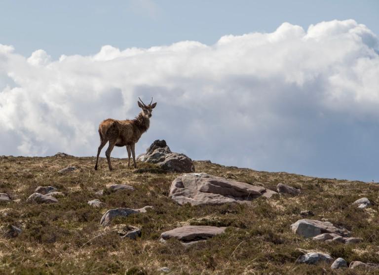 Scotland-Lochcarron-7646