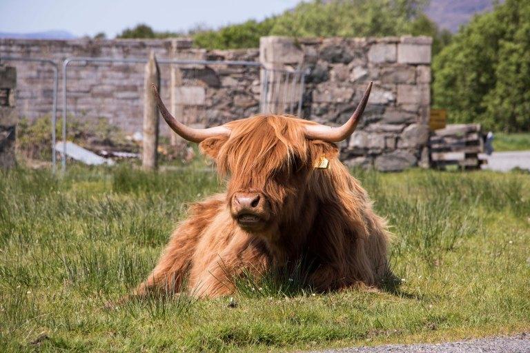 Scotland-Lochcarron-8017
