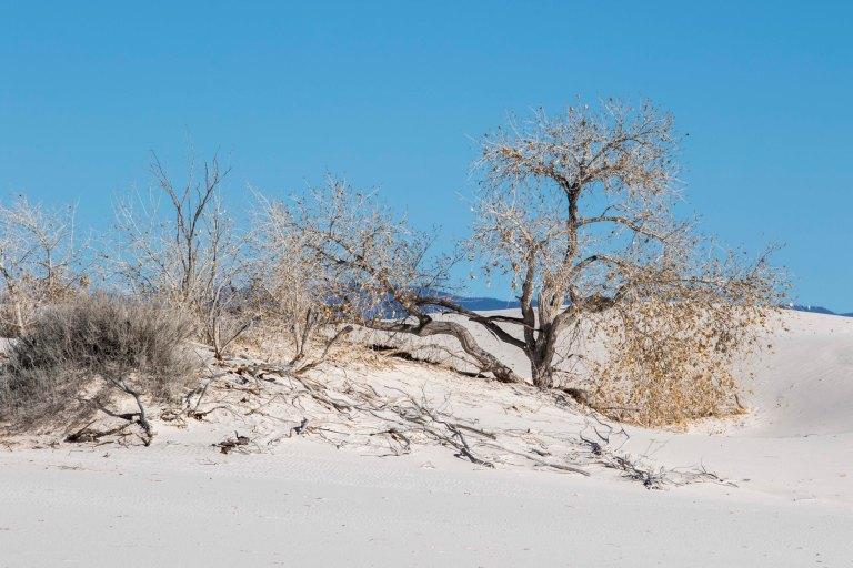 White Sands NM-2458