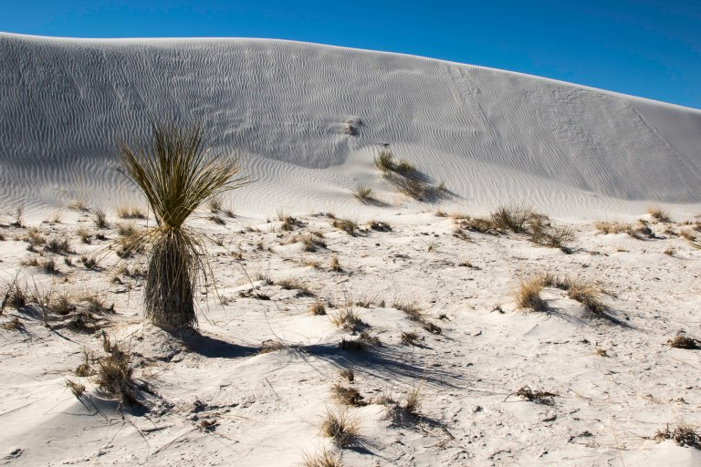 White Sands NM-5963
