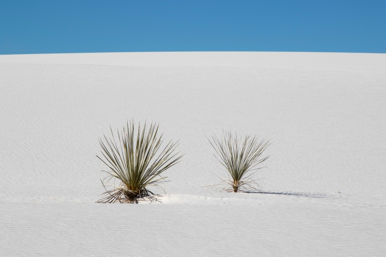 White Sands NM-5971