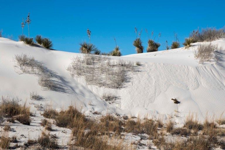 White Sands NM-5973