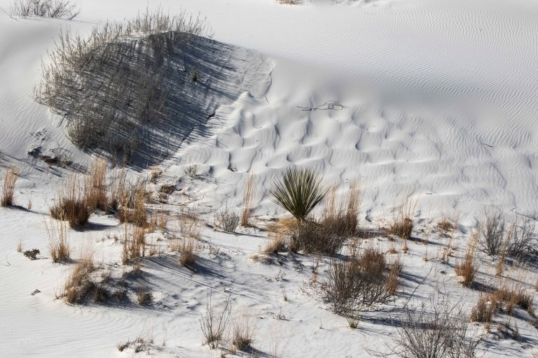 White Sands NM-5978