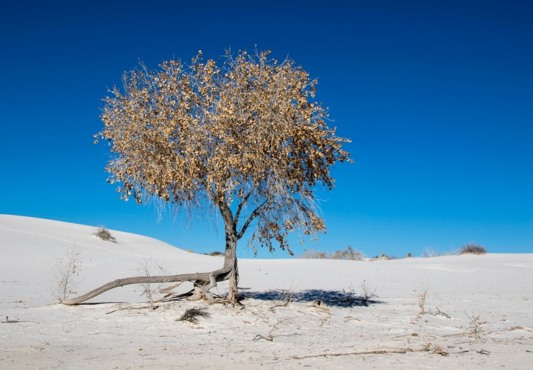 White Sands NM-5985