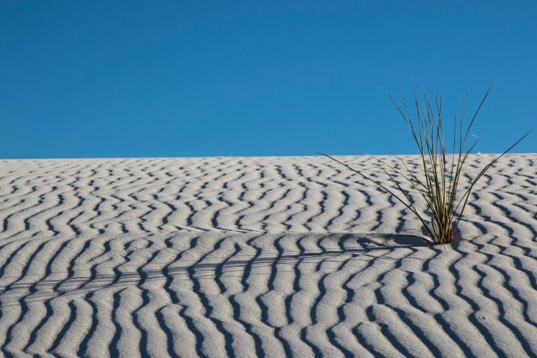 White Sands NM-5994