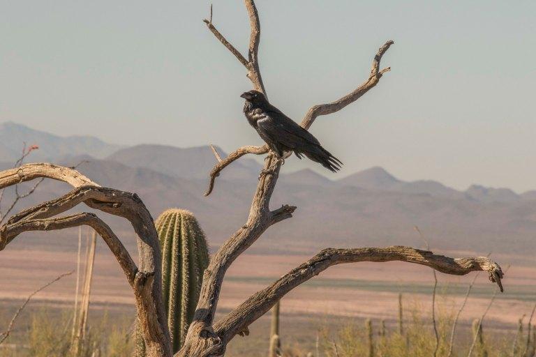 Desert Museum-2718