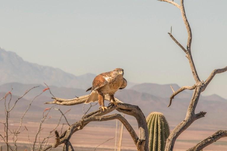 Desert Museum-2732