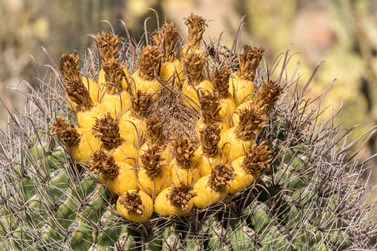 Desert Museum-2805