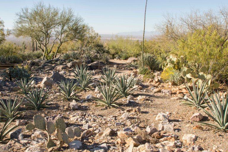 Desert Museum-6377