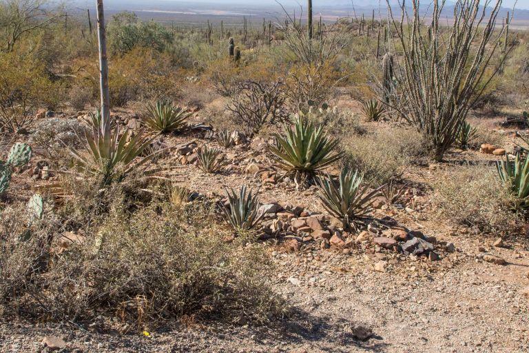 Desert Museum-6382