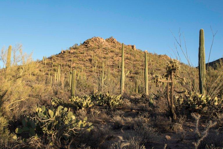 Saguaro NP-6319