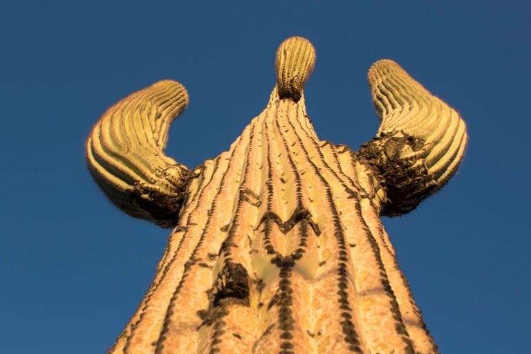 Saguaro NP-6330