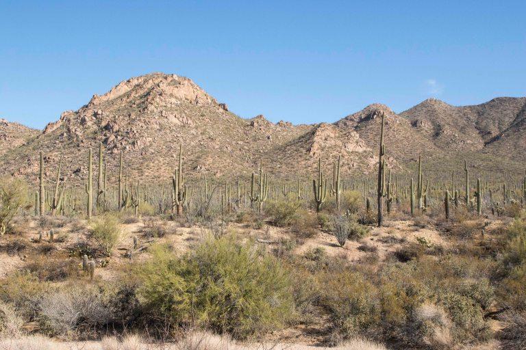 Saguaro NP-6345