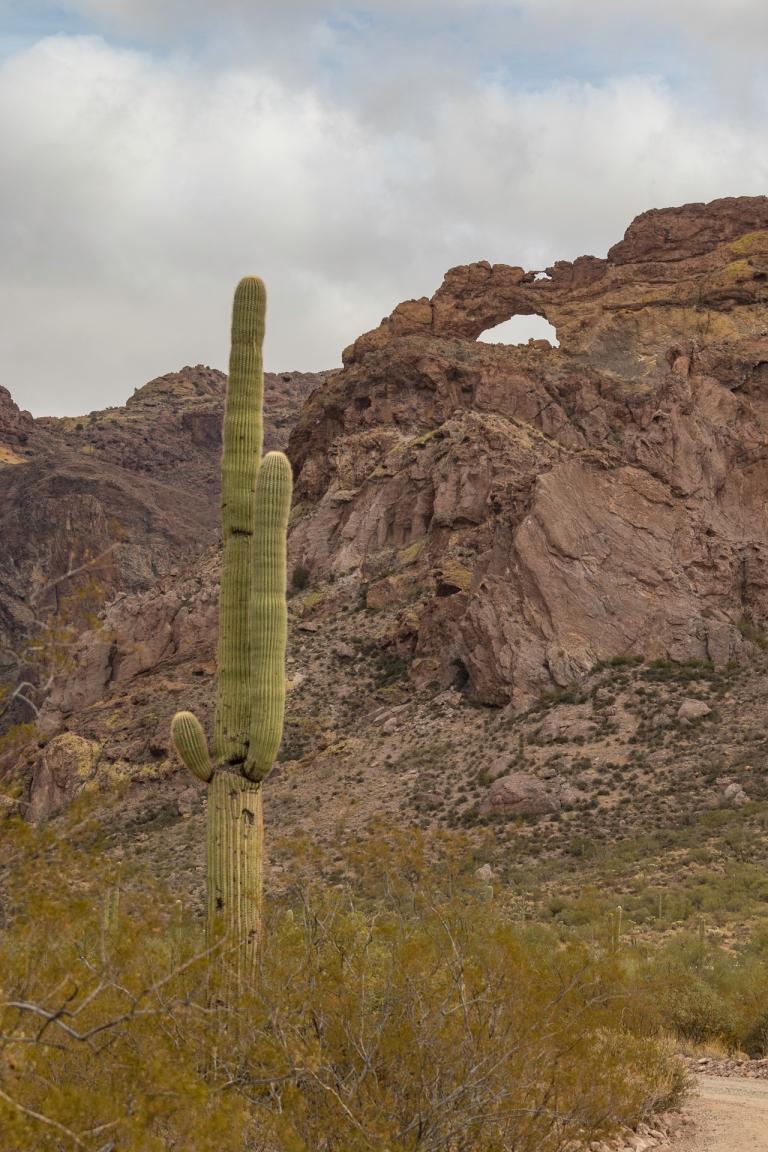 Organ Pipe Cactus-2828