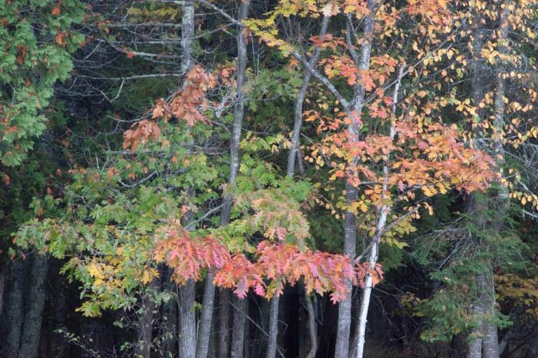 Fall -9488