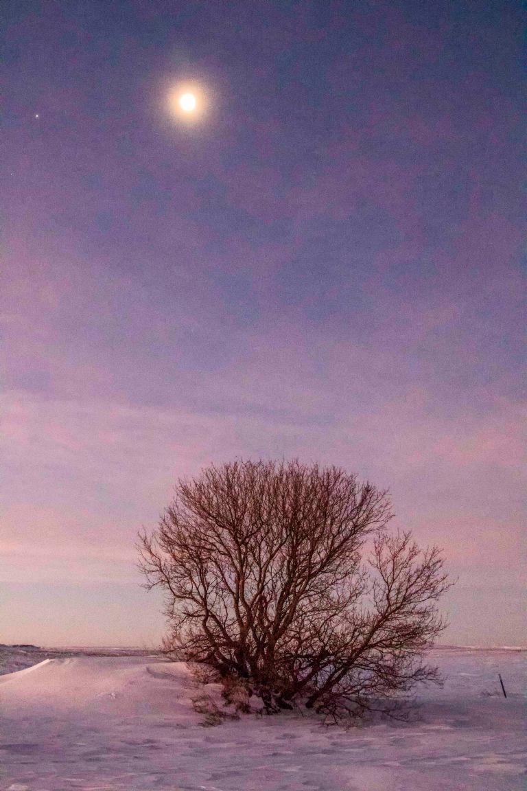 trees-1031