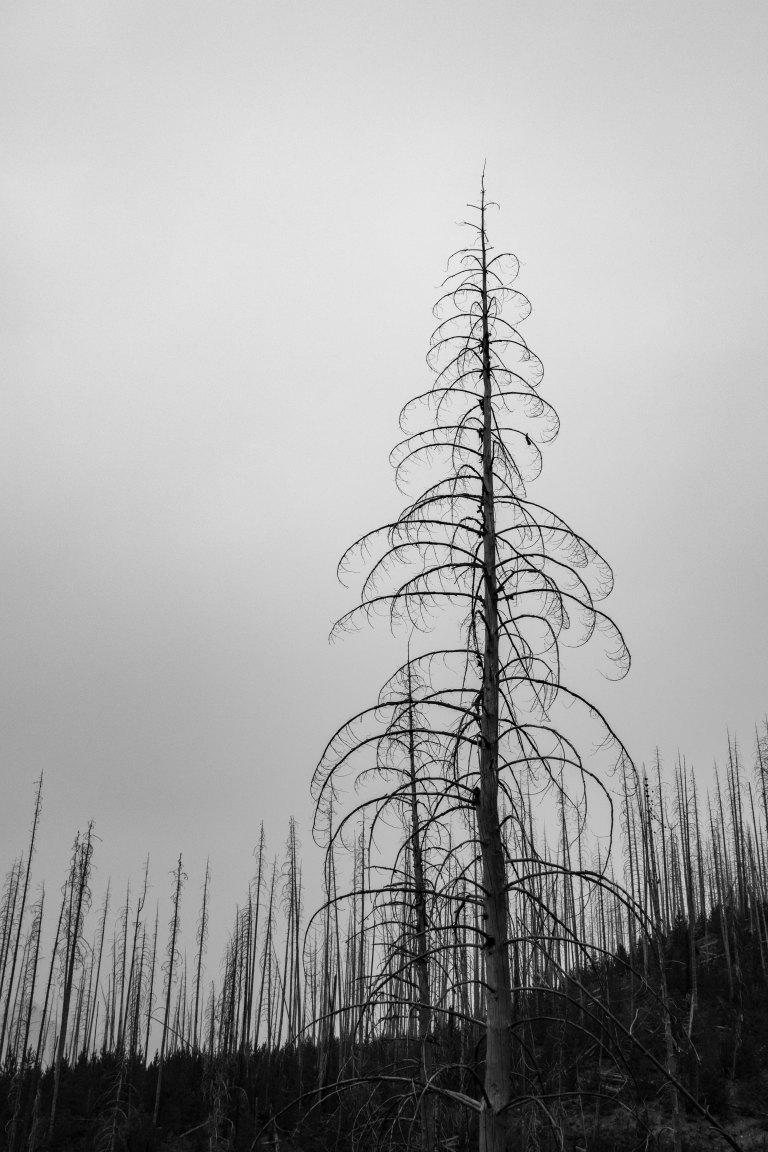 trees-2404