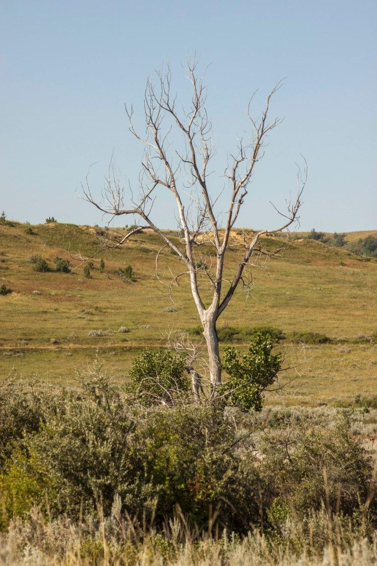 trees-2833