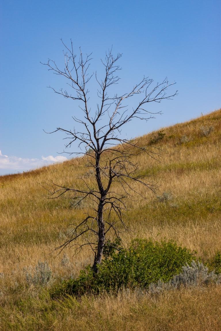 trees-2918