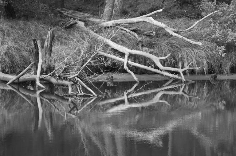 trees-3176