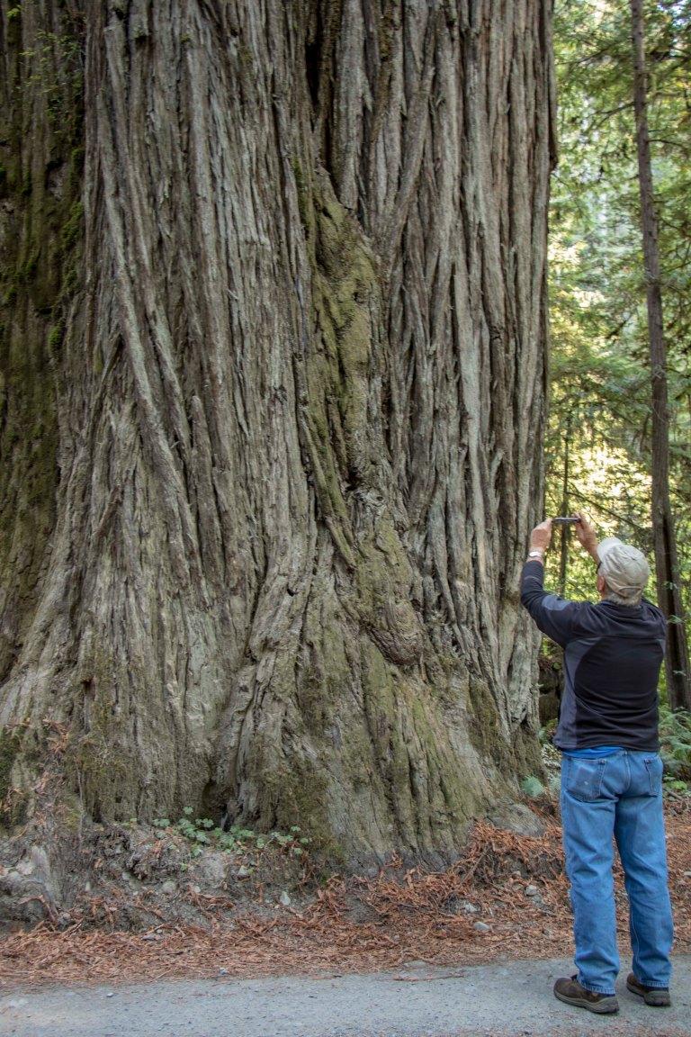 trees-3177