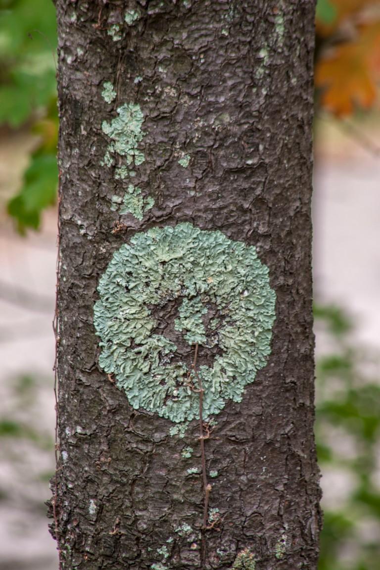 trees-3223