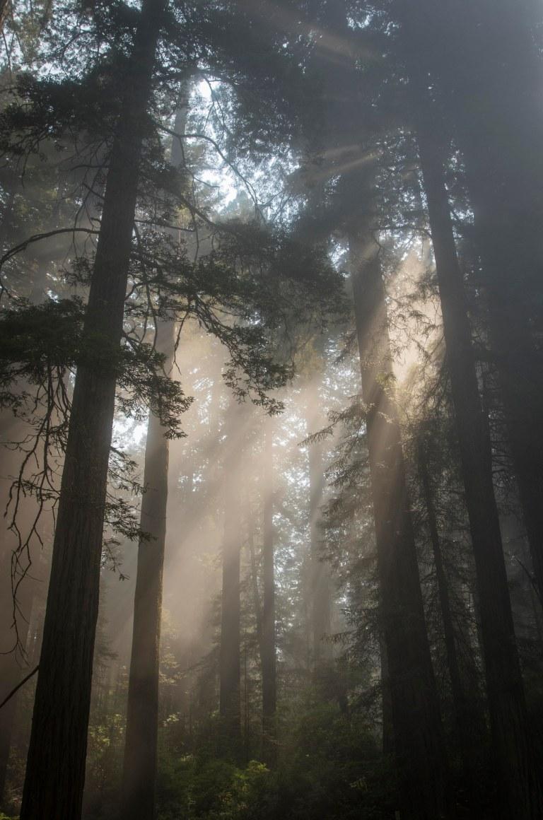 trees-3800