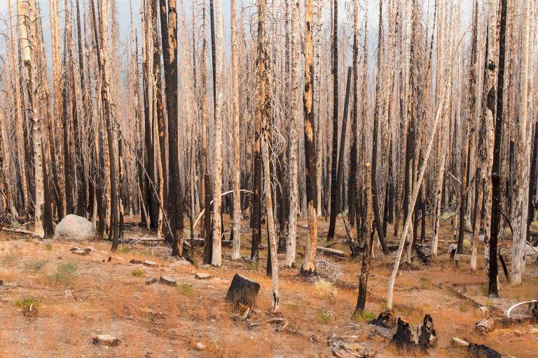 trees-3874