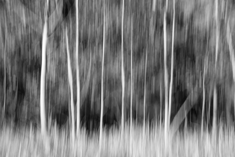 trees-4188