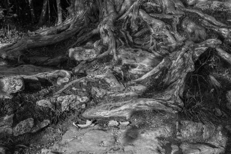trees-4978