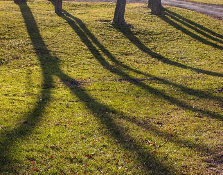 trees-5108