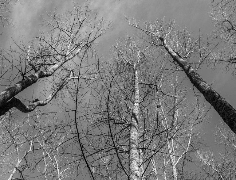 trees-5200