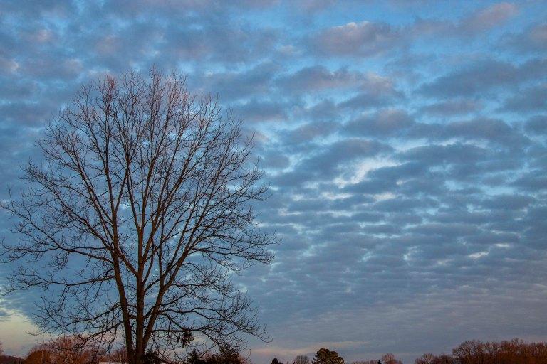 trees-5258
