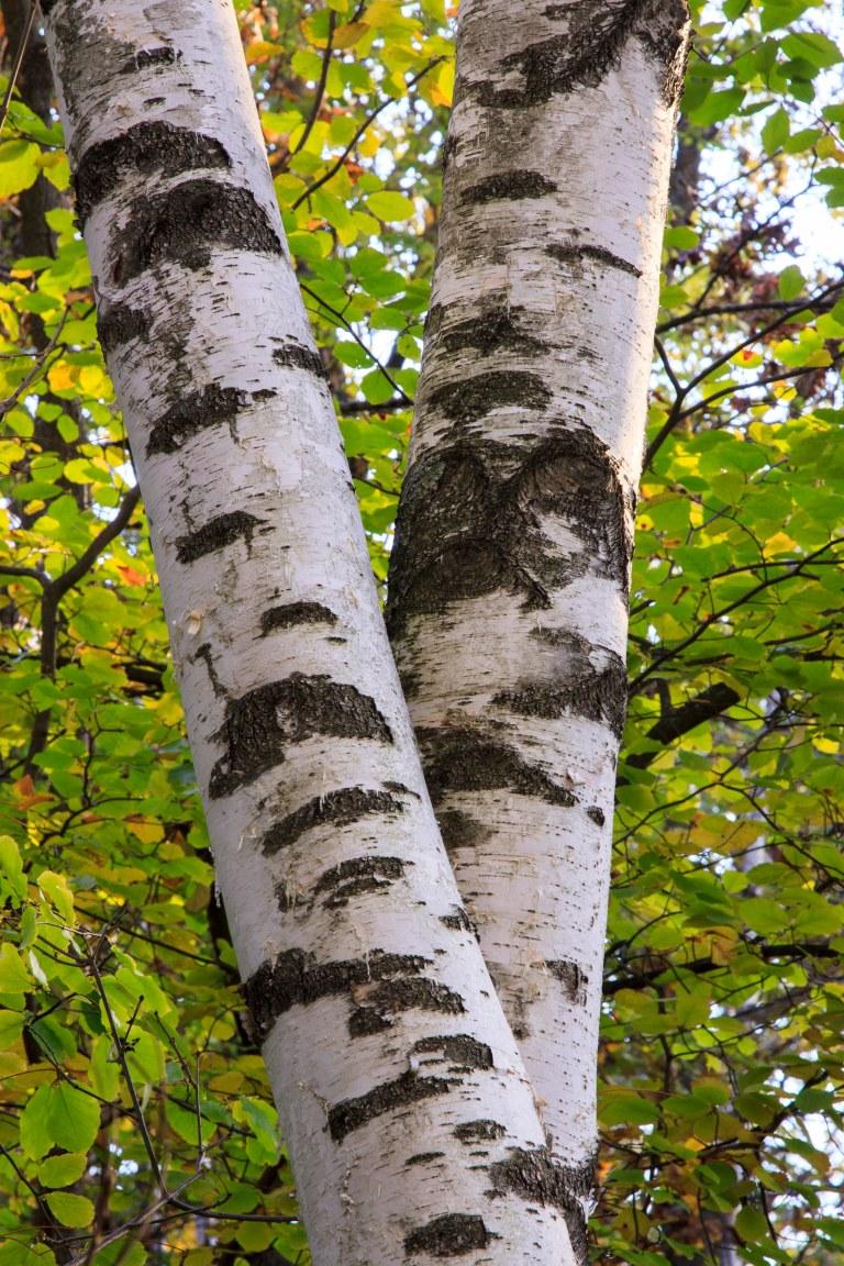 trees-7492
