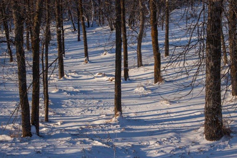 trees-8098