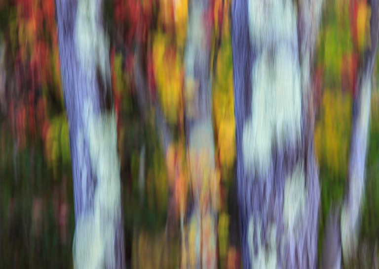 trees-9662