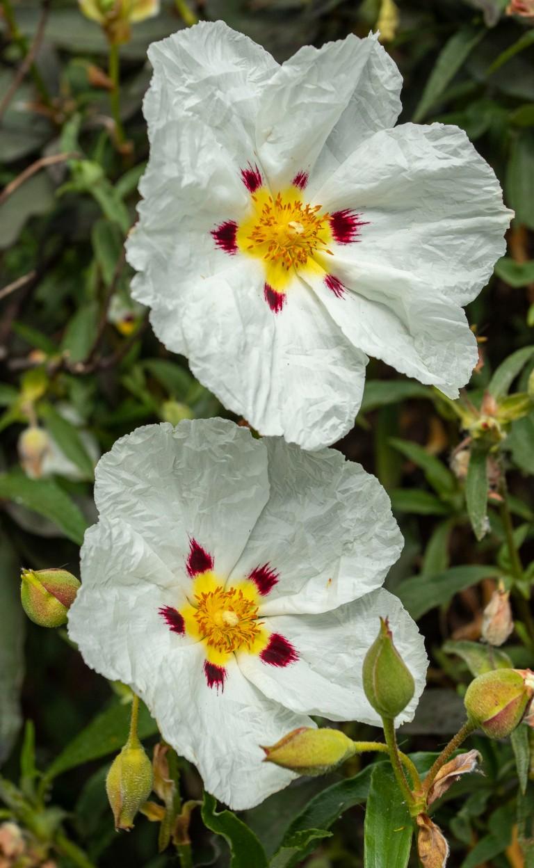 Kew Gardens-9529