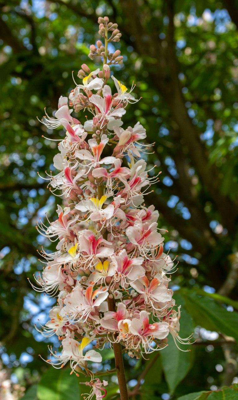 Kew Gardens-9534