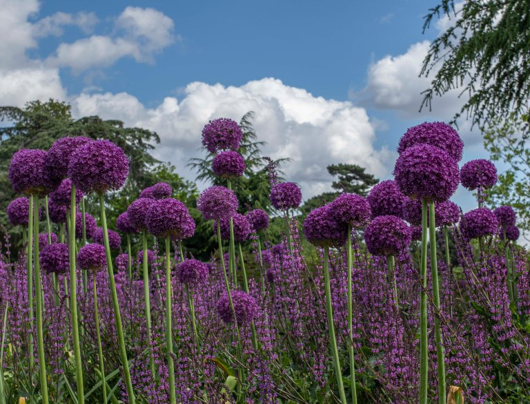 Kew Gardens-9543