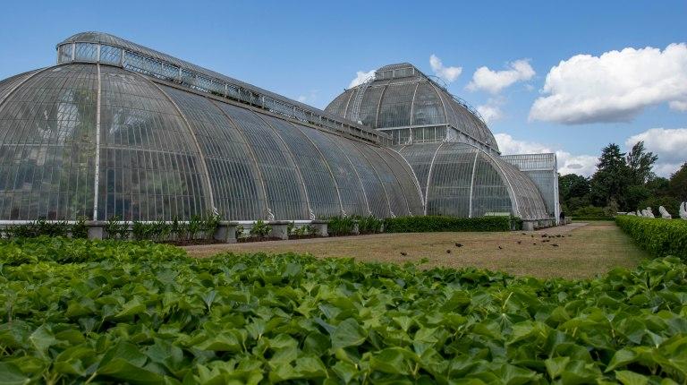 Kew Gardens-9550