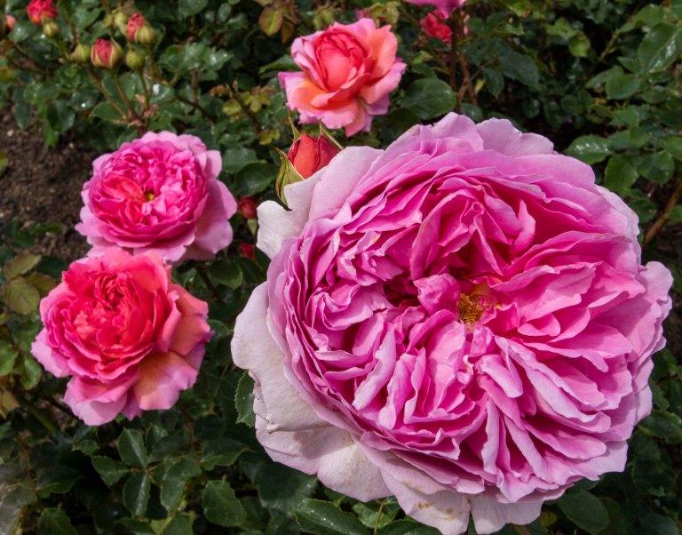 Kew Gardens-9557