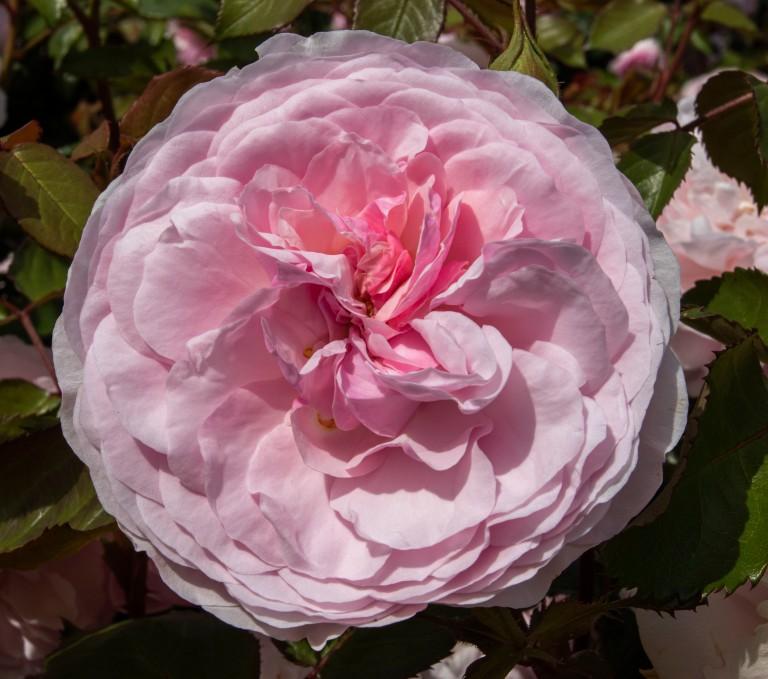 Kew Gardens-9561