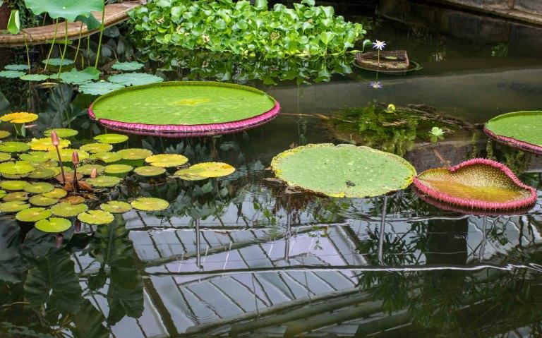 Kew Gardens-9733